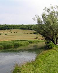 Etude de la dépollution des eaux du bassin versant de la Vouge par les bandes enherbées