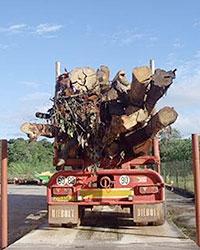 Biomasse de Guyane et Défriches. États de la situation, Enjeux et Perspectives.