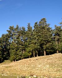 Gestion des écosystèmes forestiers dans une région rural du moyen Atlas, en contexte d
