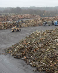 Essais Pilotes de Broyage Solutions techniques France transposables au broyage des bois guyanais pour la biomasse énergie
